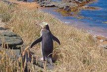 NOUVELLE ZELANDE / Blog voyage et road trip en Nouvelle-Zélande / Visit New Zealand #newzealand #nouvellezelande #roadtrip