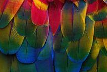 ColorFul Life / Vivid and Vibrant Colors . . . NO PIN LIMIT . . . HAPPY PINNING!!