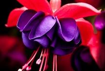 Pink Purple / NO PIN LIMIT . . . HAPPY PINNING!!