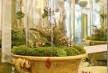 Cloche Apothecary / NO PIN LIMIT . . . HAPPY PINNING!!