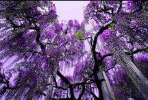 Trees / NO PIN LIMIT . . . HAPPY PINNING!!