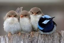 Birds / I love birds. They are such beautiful creatures, and this board is full of stunning images of everything that tweets. Wild birds, pets, garden birds, birds of paradise...you name it they probably feature!