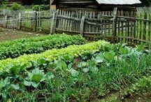 Gardening / Gardening and growing food.