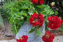 Gardening that I love / gardening / by Bonnie Williams