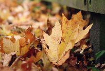 Fall to Autumn