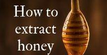 Beekeeping / Beekeeping, bees and honey!