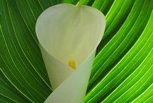 Green White / NO PIN LIMIT . . . HAPPY PINNING!!