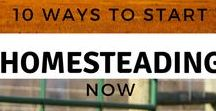 Homesteading / Farming and homesteading
