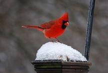 Love Cardinals!