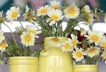 Daisies / I have always loved daisies, they have such cheerful faces and usually make me smile - pity they don't smell nice  - but I love 'em anyway!  ❀