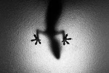 Photography / Black/white photography