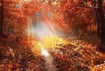 Pathway To Heaven / by JoAnn Shoe Queen 1