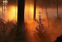 misty morning <3