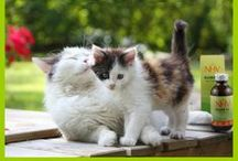 Cat Health / Keep your kitty healthy and happy with great tips on natural pet care for cats!