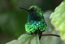 ♥ Hummingbirds ♥