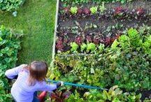Huerto y Jardín / Colores, olores, sabores / by elangreen.com
