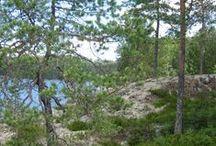 Woods / Suunnittelun apulaisena luonto ympärilläni.