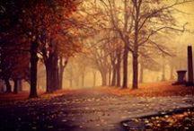 autumn / ősz, autumn, Herbst
