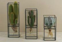 Creatief met planten / Ik vind planten heel erg leuk maar vooral om ze op een bijzondere manier te presenteren. Op dit bord heb ik daarom allerlei soorten planten en manieren om ze te houden gepint.