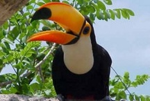 Brazilius Nature