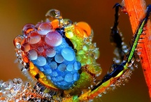 BUTTERFLIES & INSECTS & ... / by Roberto Grubhofer