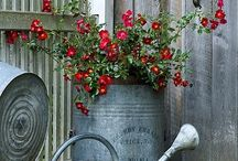 Watering Cans / For the love of all kinds and shapes of garden watering cans.