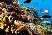 Bali - Indonésie / Travel #1 where I want to go !