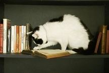 Book or Cat? Which came first? / I know Cat came first,and Book second. It's a close second thou Please pin cats with books and only healthy cats, if the books are unhealthy ah well that's ok.