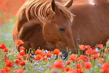 Horses / This board has all the range from stunning pictures to quotes and motivations.