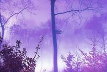 Purple Reins
