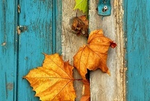 Glorious Autumn / Getting a feel for the glorious colors of autumn.