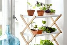 Bring the garden indoors! / Bring your garden indoors! For gardening tips, tricks, and ideas, check out our other boards!