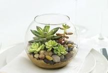 HOME - TERRARIUMS / by Marilyn McQueen