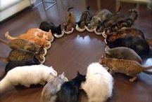 GATTISSIMI! / GATTI - CATS - CHATS - KATZE - GATOS