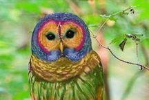OWL WORLD
