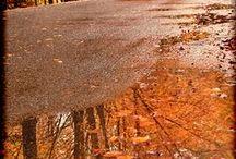 Autunno. La pioggia che cade e non cade  le nebbie striscianti che svelano e velano strade..