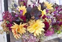 FLOWER ART / Flowers - Fiori - Fleurs - Blumen - Flores