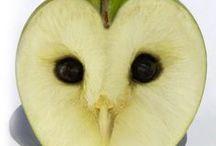OWL ART / Owls - Gufi & Civette - Chouettes & Hiboux - Eule
