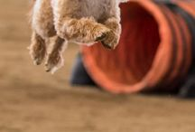 Agility Dogs / Everything I love about Dog Agility!