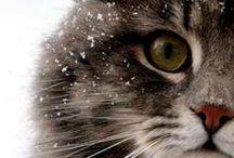 Cat :D <3