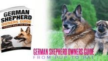 We ♥ German Shepherds! / Yes, we absolutely love German Shepherds! Intelligent, super-friendly, playful and so much more...