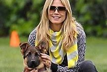 Celebrities love GSD! / Famous people who own German Shepherds