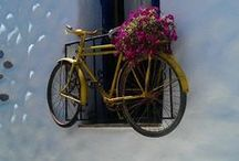 Bicycle / Bikes