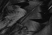 Black ~✿ڿڰۣ