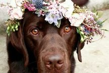 Pets and weddings :)