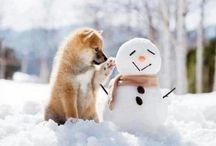 I love cute animals / animals