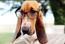 Animals Wearing Glasses