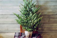Christmas / Christmas decorating ideas and more