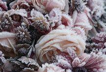 Suzy Snowflake / Winter Photo Inspiration