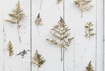 Ferns / inspiration   design work